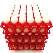 Munarest 20-le munale